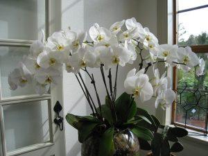 White Lili Interior Decor